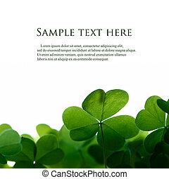 三葉草, 空間, text., 綠色, 葉子, 邊框