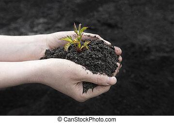 世界, 種子, 人類, 天, 土壤, 藏品, 領域, 新芽, 背景, earth., 關閉, 黑色女性, 農業, 向上, concept., 手, 樹