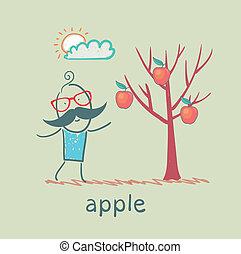 人, 樹, 站立, 蘋果