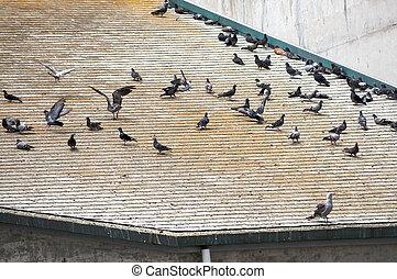 休息, 群, 鳥, 屋頂