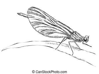 休息, 蜻蜓