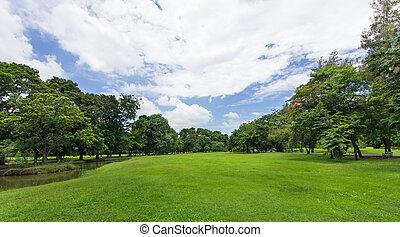 公眾, 藍色的天空, 樹, 公園, 綠色的草地