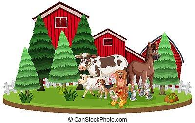 前面, 動物, 場景, 穀倉, 農場, 站立