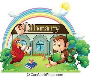 前面, 圖書館, 猴子, 鸚鵡, 閱讀