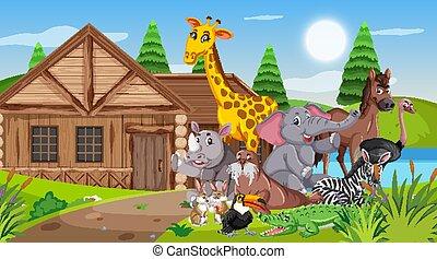 前面, 荒野, 木制, 場景, 動物, 村舍
