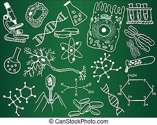 勾畫, 生物學, 學校, 板