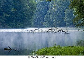 匈牙利, 熱帶, 樹, 湖, 平靜, 水, 明亮, 在戶外, 植物, 和平, 摘要, impassable, 風景, 陽光普照, 自然, 酒, 天, 背景, 葉子, 霧, 綠色, 春天, 分支, 魔術, 自然, 有机, 河, 環境, 成長, 打掃, 陽光, 反映, 波浪, 荒野, 新鮮, 草, 美麗, 離開, 瀑布, 森林, 樹林, 植物學, 發光, 美麗, 夏天