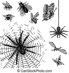 古董, 昆虫, 集合, (vector)