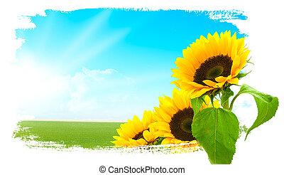 向日葵, 藍色的天空, -, 風景, 陸地, 綠色
