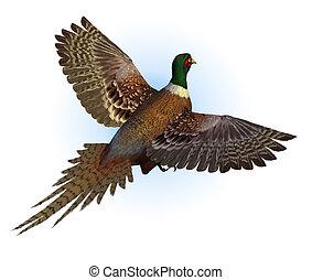 圓環頸項野雞, 飛行