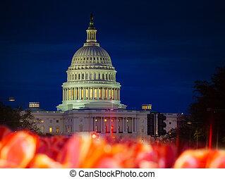 在上方, 我們, 床, 州議會大廈, 郁金香, 花, 夜晚, 建築物