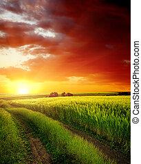 在上方, 領域, 綠色, 路, 鄉村, 傍晚, 紅色