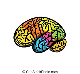 地圖集, 段, 看法, 邊, 上色, 卡通, illustration., 部分, 腦子, gyrus, 矢量, 標識語, 概念