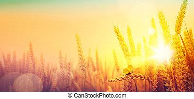 夏天, 小麥, 黃金, 農村, 在上方, 領域, landscape;, 日出