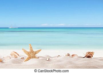 夏天, 海灘, strafish, 殼