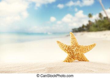 夏天, 海灘, strafish