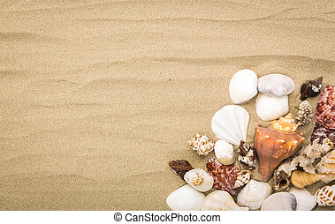 夏天, 背景, 殼, 沙子海, 海灘