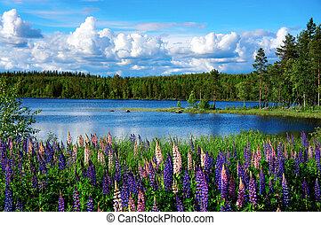 夏天, 風景, 斯堪的納維亞人