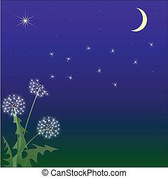 夜晚, 針對, 天空, 飛行, 蒲公英
