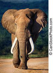 大象, 接近