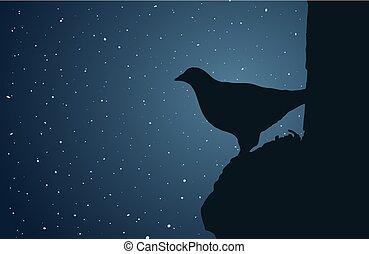 天空, 鳥, 夜晚