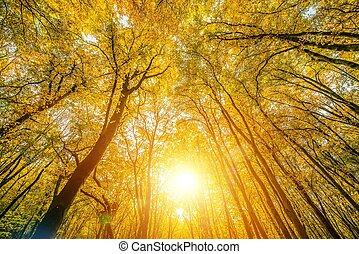 天蓬, 陽光普照, 森林