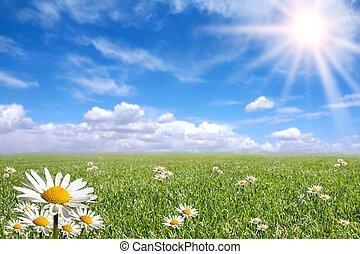 天, 外面, 明亮, 愉快, 春天