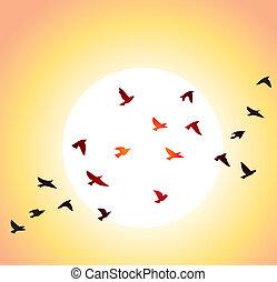 太陽, 明亮, 飛行, 鳥