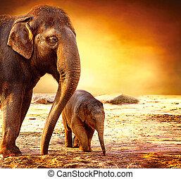 嬰孩, 母親, 在戶外, 大象