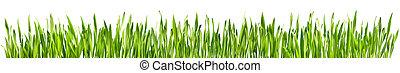 完美, 春天, -, 被隔离, 草, 邊框