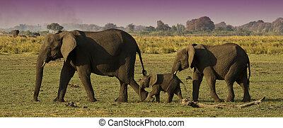 家庭, 大象