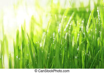 小滴, 陽光普照, 水, 明亮, 背景, 水平, 草