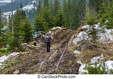 山, 泥土, 攝影師, 松樹森林, 路