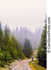 山, 霧, 路, 人