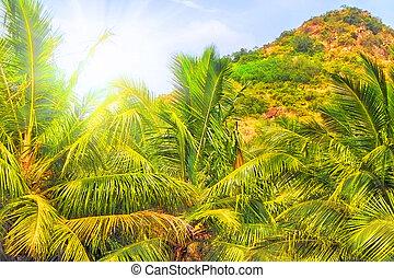 山, tropics.