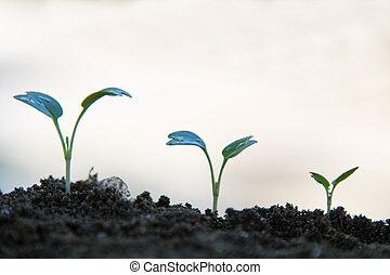 序列, 植物, 背景, 白色, 生長