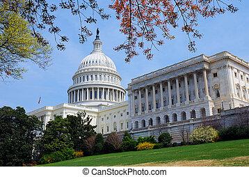 建築物, dc., 州議會大廈, 華盛頓, 樹, 小山