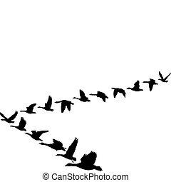 形狀, 飛行, 鵝, 單位