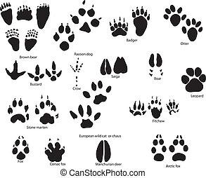 形跡, 動物, 標題