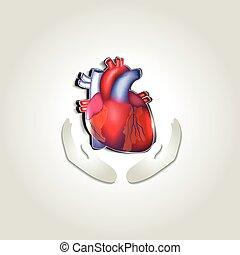 心, 符號, 健康, 人類, 關心