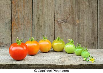 成熟, 過程, 水果, 番茄, 階段, -, 演化, 發展, 紅色