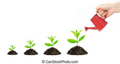 成長, 錢, 套間, 概念, 金融, 樹