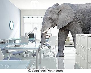 房間, 大象