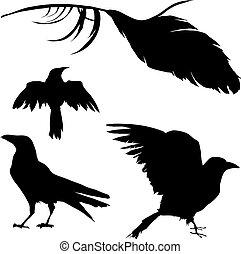 掠奪, 羽毛, 烏鴉, 矢量