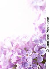 春天花, 藝術, 背景, 紫丁香