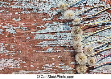 春天花, 邊框, 背景