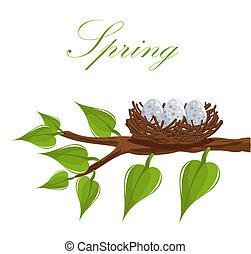 春天, 巢