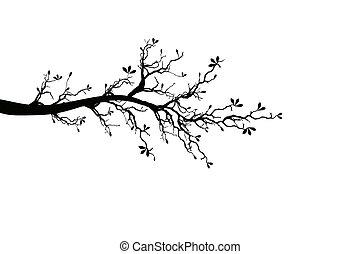 春天, 樹枝