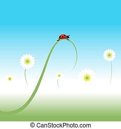春天, 瓢蟲, 背景