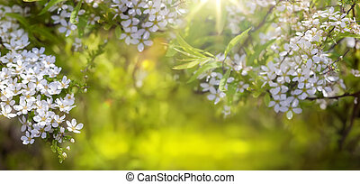 春天, 背景, 花, 邊框